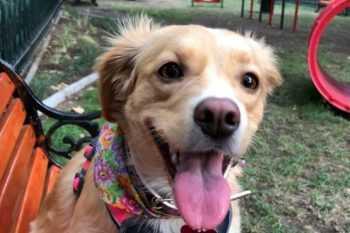 Tenencia responsable: ¿Se puede inscribir a una mascota sin chip?